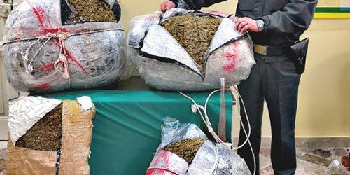 Coltivava da solo 675 piante di marijuana: arrestato un 51enne